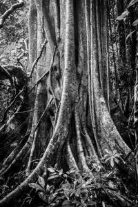 The Datai Langkawi (6 of 48)