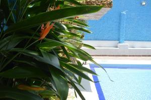 Hotel Casablanca, Hotels  Girardot - big - 27