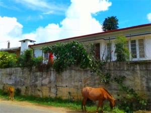 Blackpool 55, Privatzimmer  Nuwara Eliya - big - 48