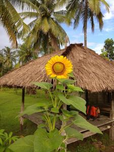 Dedy's Homestay, Проживание в семье  Кута Ломбок - big - 19
