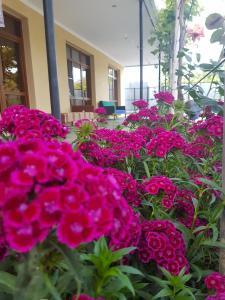 U Norika i Susanny Guest House, Locande  Alakhadzi - big - 27
