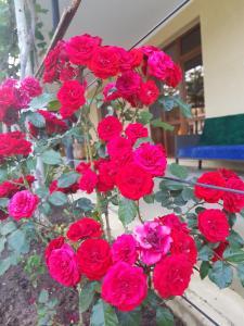 U Norika i Susanny Guest House, Locande  Alakhadzi - big - 25