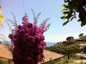 Villa Glicine - AbcAlberghi.com
