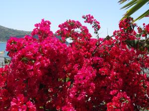 Ionian View, Ferienwohnungen  Himarë - big - 41