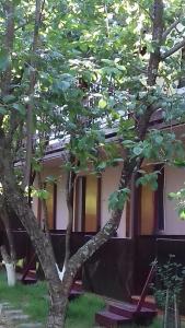 Guest House Kamelia, Pensionen  Pizunda - big - 61