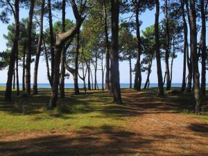 Black Sea Beach House, Case vacanze  Grigoleti - big - 35