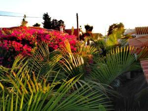 Malaga Beach Holidays, Хостелы  Ринкон-де-ла-Викториа - big - 37