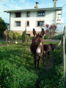 Agroturismo Pagoederraga, Farmy  Orio - big - 36