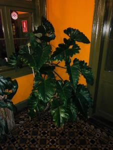 Domeyer Hostel, Hotels  Lima - big - 39
