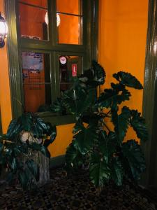 Domeyer Hostel, Hotels  Lima - big - 28