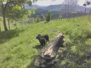 Agroturismo Pagoederraga, Farmy  Orio - big - 34