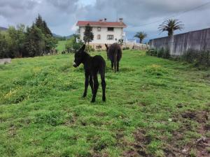 Agroturismo Pagoederraga, Farmy  Orio - big - 38