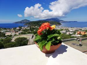 Procida Panorama mozzafiato - AbcAlberghi.com