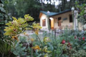 Hutton Cottage By Stay Native, Ferienhäuser  Nainital - big - 2