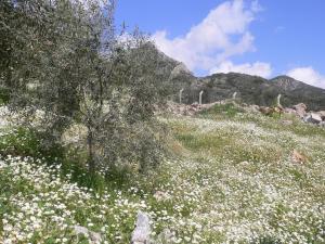Natureland Efes Pension, Residence  Selcuk - big - 27