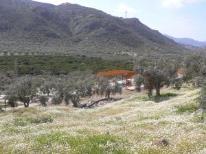 Natureland Efes Pension, Residence  Selcuk - big - 2
