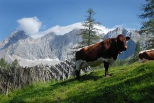 Chalet Kuschelhütte, Chalet  Ramsau am Dachstein - big - 28