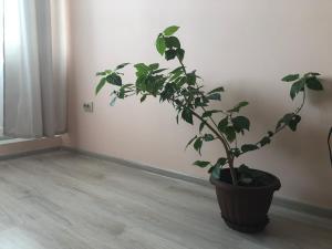 Сдам квартиру посуточно, Apartments  Ulan-Ude - big - 3