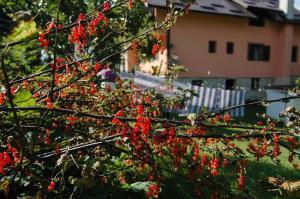 Rooms Family Glumac, Гостевые дома  Езерца - big - 103
