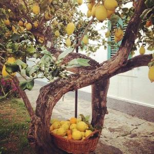 Il Giardino dei Limoni - AbcAlberghi.com