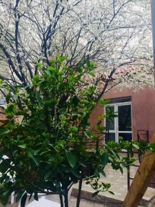 Tiflis Patio Guest House, Vendégházak  Tbiliszi - big - 41