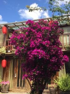 Lijiang Shuhe Qingtao Inn, Penziony  Lijiang - big - 117