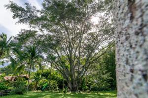Villa Margarita, Bed and breakfasts  Alajuela - big - 63