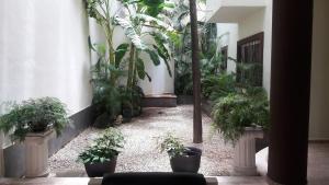 Mango y Papaya, Apartments  Playa del Carmen - big - 76