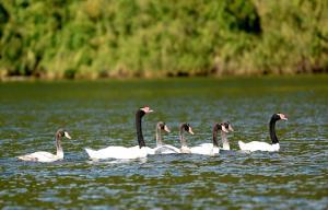 Lodge Y Cabañas Los Cisnes, Lodges  Valdivia - big - 33