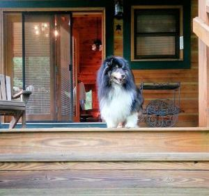 Baird's Creek Cabin, Дома для отпуска  Poplar Grove - big - 8