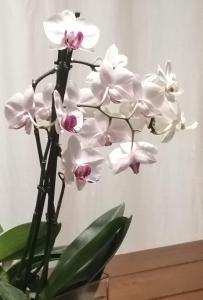 Stanza Orchidea - AbcAlberghi.com
