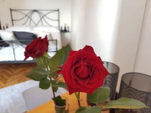 4 hviezdičkový apartmán Apartman 15 Rijeka Chorvátsko