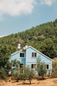 Blue House In The Woods- Amirim