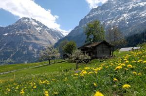 Aspen Alpine Lifestyle Hotel, Hotely  Grindelwald - big - 10