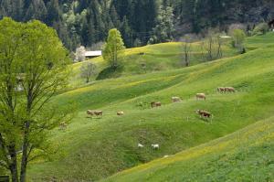 Aspen Alpine Lifestyle Hotel, Hotely  Grindelwald - big - 25