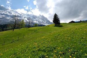 Aspen Alpine Lifestyle Hotel, Hotely  Grindelwald - big - 27