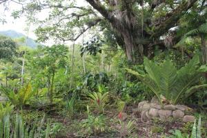 Talamanca Reserve, Отели  Rivas - big - 90