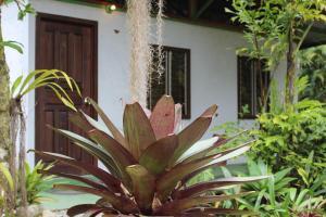 Talamanca Reserve, Отели  Rivas - big - 15