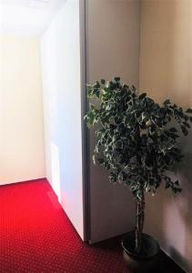 Centrum Zdraví Bez Limitu, Penziony  Starý Jičín - big - 26