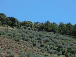 Quinta das Aveleiras, Farmy  Torre de Moncorvo - big - 5