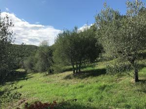Villa La Selva, Villák  Quadro Vecchio - big - 47