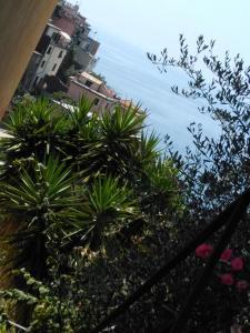 Sole Terra Mare, Penziony  Corniglia - big - 14