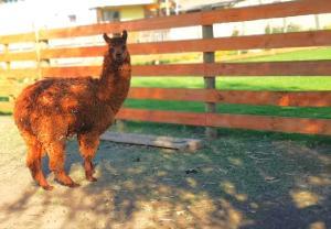 Cabañas Central, Case vacanze  Pichilemu - big - 7