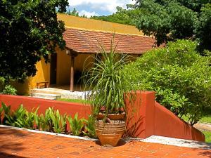 Hacienda Misné, Hotely  Mérida - big - 29