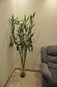The Village Comfort Studio, Ferienwohnungen  Kairo - big - 20