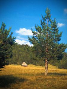 Previja Zlatibor Chalet, Horské chaty  Zlatibor - big - 44