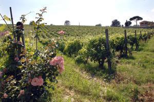Azienda Agricola Buon Riposo, Ferienhöfe  San Giovanni a Corazzano  - big - 12