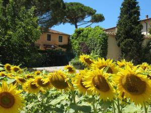 Azienda Agricola Buon Riposo, Ferienhöfe  San Giovanni a Corazzano  - big - 49
