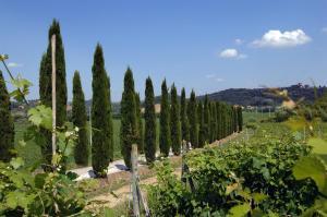 Azienda Agricola Buon Riposo, Ferienhöfe  San Giovanni a Corazzano  - big - 8