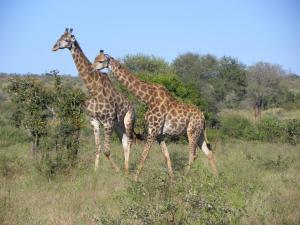 Pestana Kruger Lodge (17 of 47)